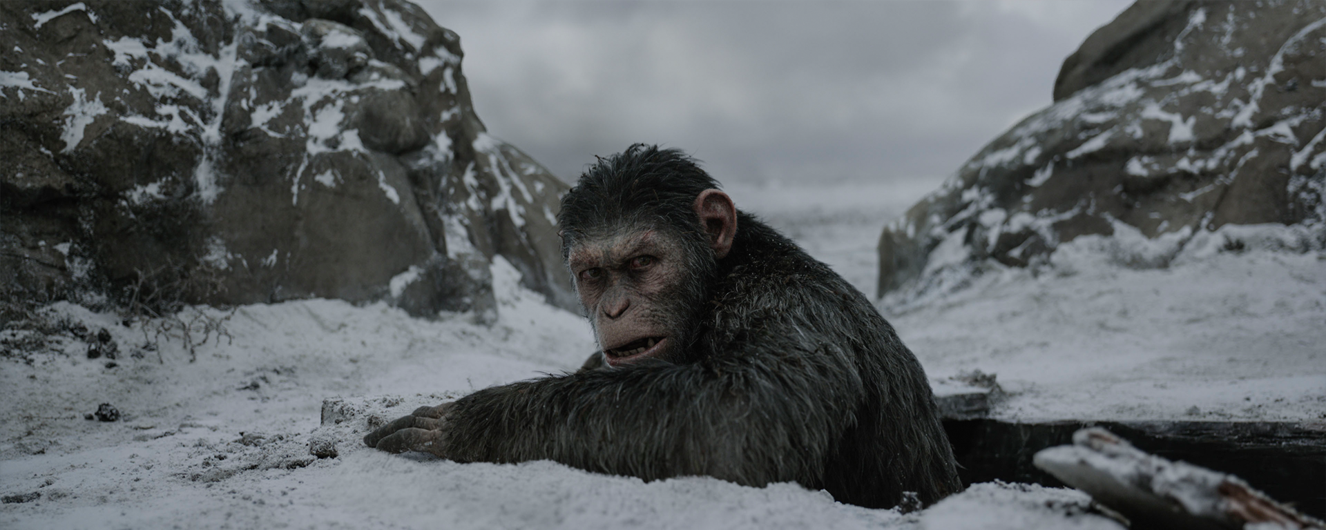 <em>War for the Planet of the Apes</em>